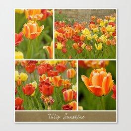 Tulip Sunshine Canvas Print