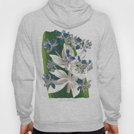 Cochliostema Jacobianum Spiderwort Blue Flower color lithograph Hoody
