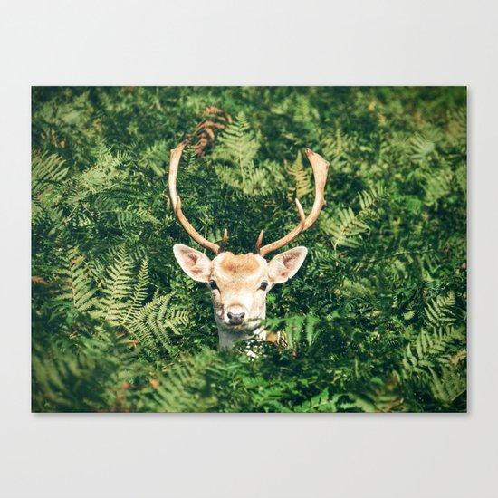 deer cerf 4 Canvas Print