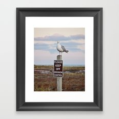 Gulls can't read Framed Art Print