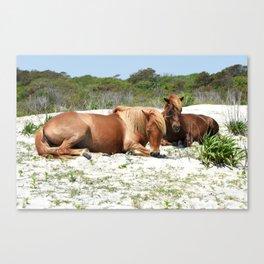 Wild Ponies of Assateague Having a Rest Canvas Print
