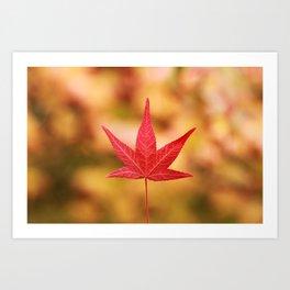 A Canadian Autumn Art Print