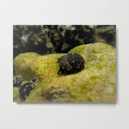 mr. hermit crab Metal Print