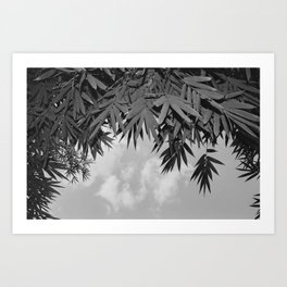 Bamboo By The Pool Art Print