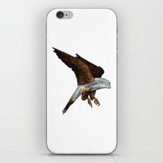 Peregrine Dolphin iPhone & iPod Skin