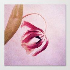 madame tulip Canvas Print