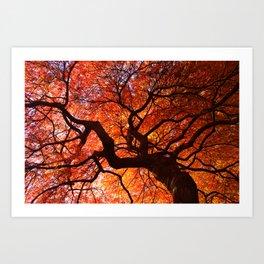 Ephemeral - Fall Maple Leaves, Nature Photography Art Print