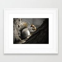 squirrel Framed Art Prints featuring Squirrel by Mandy Becker
