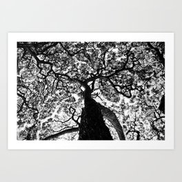 Hawaiian Tree  Art Print