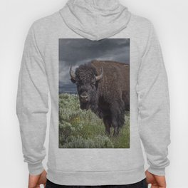 American Buffalo Bison in Yellowstone National Park Hoody