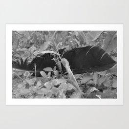 Black plume Art Print