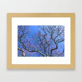 Blue Jacaranda 3/3 Framed Art Print
