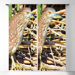 Russet Colored Eyes Blackout Curtain