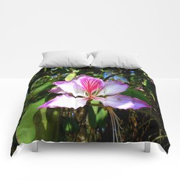 Orchid Glory Comforters