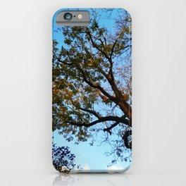 blue sky tree autumn iPhone Case