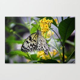 """""""Butterfly"""" Canvas Print"""
