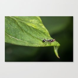 Planning for Winter Canvas Print