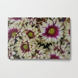 Multi color daisies! Metal Print