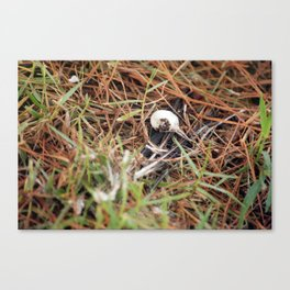 Bird Bones Canvas Print