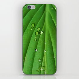 After Spring Rain - Water Droplets on a Leaf iPhone Skin