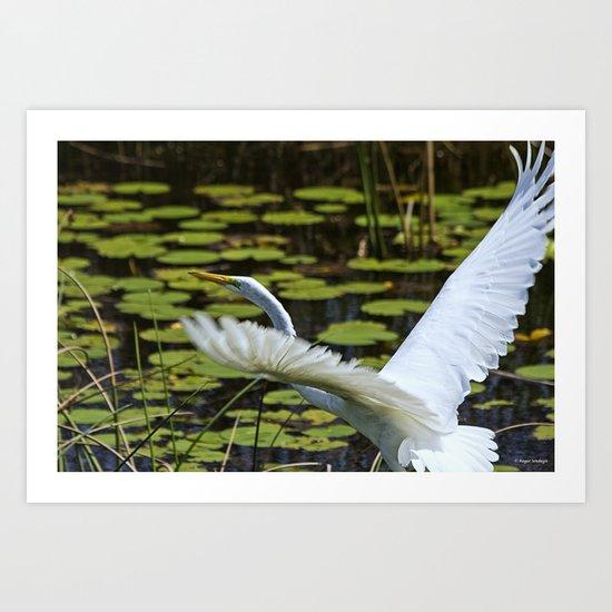 Egret Take Off Art Print