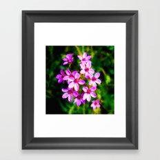 Spring Sweetness Framed Art Print