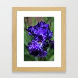 Insatiable Iris Framed Art Print