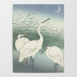 Herons in Shallow Water, Ohara Koson, 1934 Poster