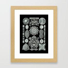 Ernst Haeckel - Scientific Illustration - Diatomea Framed Art Print
