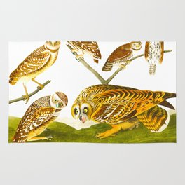 Burrowing Owl Illustration Rug