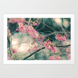 Dreamtime in Spring Art Print