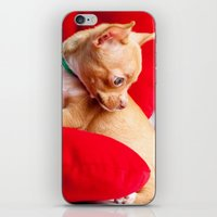 chihuahua iPhone & iPod Skins featuring Chihuahua by Luca Spanu