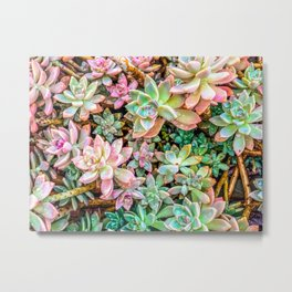green and pink succulent plant garden Metal Print