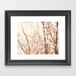 Spring Cherry Blossoms Framed Art Print