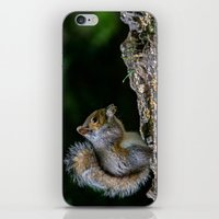 squirrel iPhone & iPod Skins featuring Squirrel by Fine Art by Rina