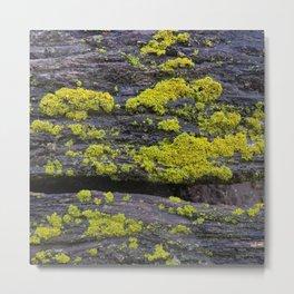 Lichen on Lumber Metal Print