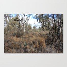 Sunraysia Bushland Canvas Print