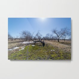 Winter Orchard Metal Print