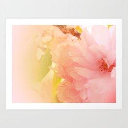 Cherry Blossom Glow Art Print