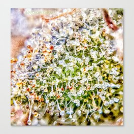 Constellation Top Shelf Bud Diamond OG Strain Trichomes Close Up View Canvas Print
