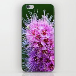 Beauty Home Of The Little Spider iPhone Skin