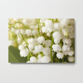 Flower lily of the valley Metal Print