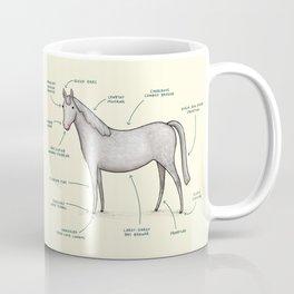 Anatomy of a Horse Coffee Mug