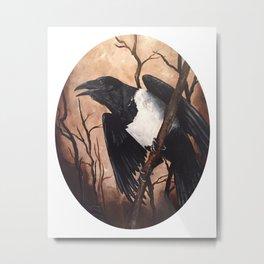 Pied Crow Metal Print