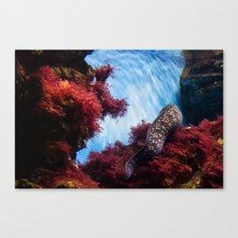 Sea Bed and Moray Canvas Print