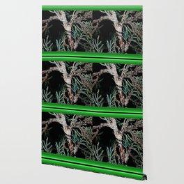 Bonsai tensai Wallpaper