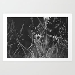 roadside wildflowers Art Print