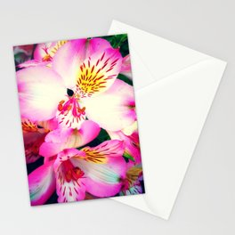 Pink Peruvian Lilies (Alstroemeria) in Bloom Stationery Cards