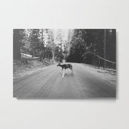 CROSSING / Yosemite Valley, CA Metal Print
