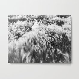 Finding Evolutionary Flow Metal Print